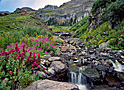 Wildflower Basin