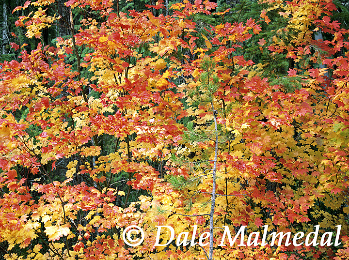 Umpqua Autumn